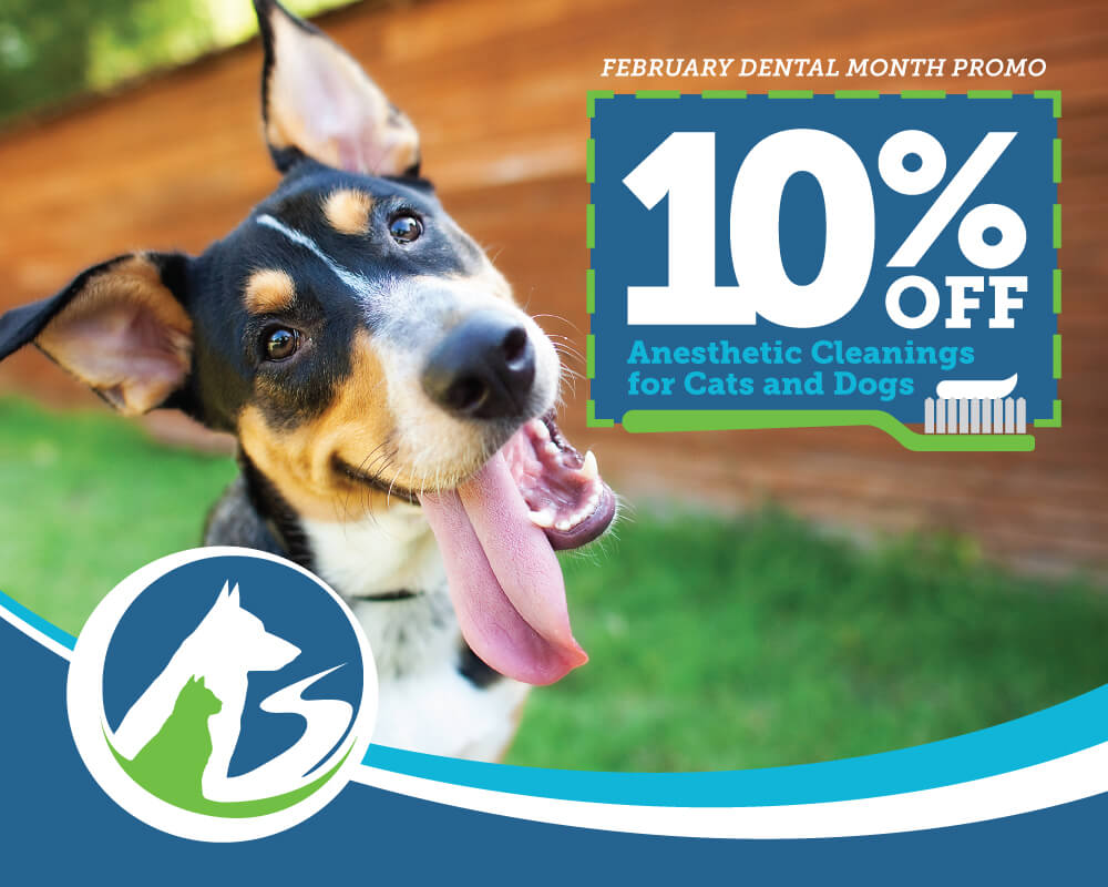 Book now for our dental special and receive 10% off your pets ultra sonic dental procedure.